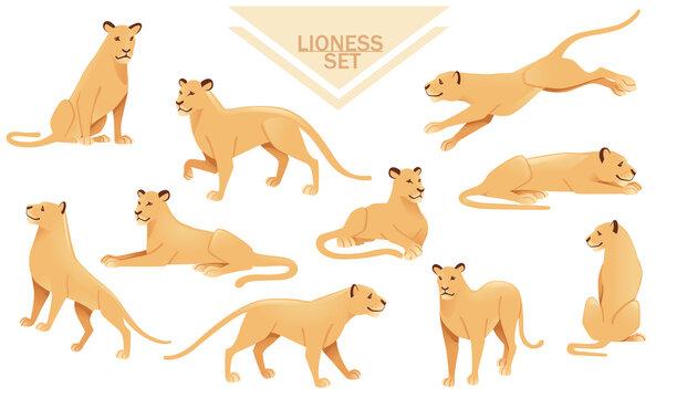 Set of lioness female lion animal cartoon design african savannah predator vector illustration on white background
