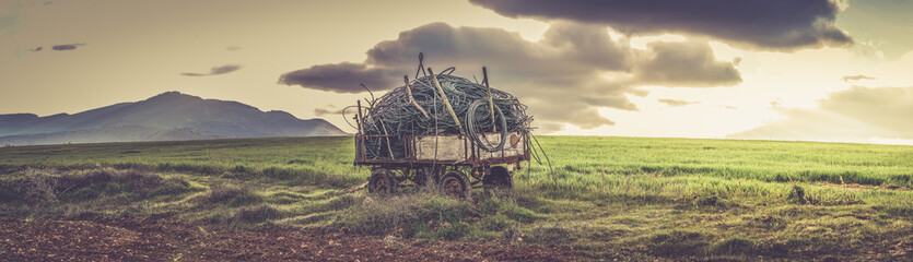 Green fields and agricultural cart