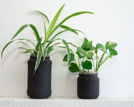 Indoor house plants in painted glass jar against white wall. Spider and pathos green house plants
