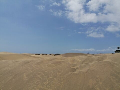 sand dunes on the beach