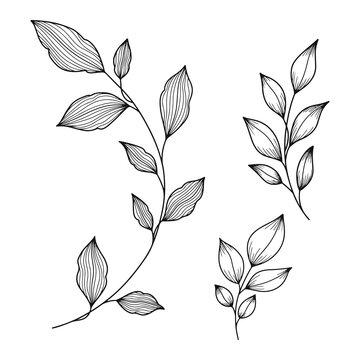 Hand drawn botanical leaves line art