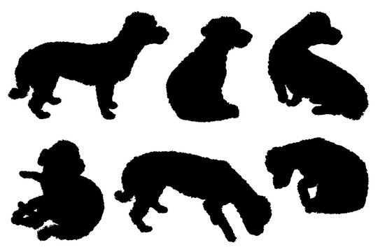 Collection of bichon maltese dogs silhouettes isolated on white