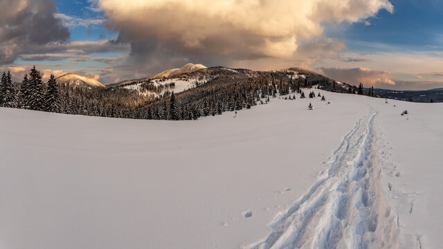 High Resolution Panoramic view of tracks in deep snow leading to a fir tree forest, Pangarati, Harghita, Romania, 45Mp