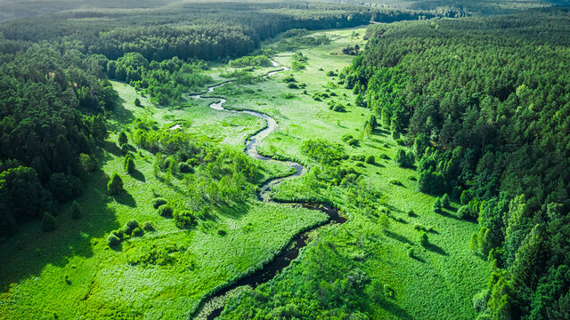Curvy river and swamps at sunrise. Wildlife in Poland