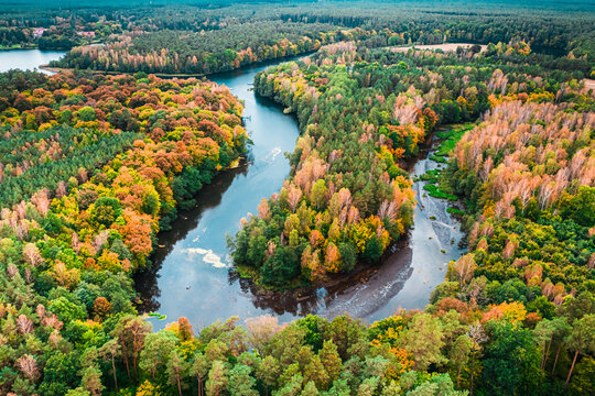 Small river and autumn forest. Aerial view of wildlife, Poland