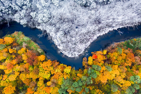 Snowy and colorful forest. Winter and autumn in one place