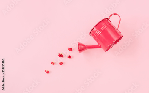 Garden watering can with red flowers on pink background. Creative spring bloom concept with copy space. Women's day, wedding, Valentine's day, Mother's day or anniversary idea. Flat lay, top view.