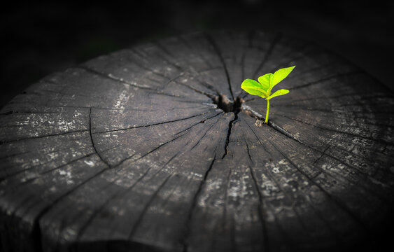 Rebirth of seed