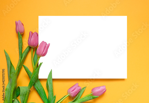 Layout and pink tulips on a yellow background. Greeting card for Mother's Day, International Women's Day. Spring background. copy space for text. Template for design. Flat lay, top view. mockup