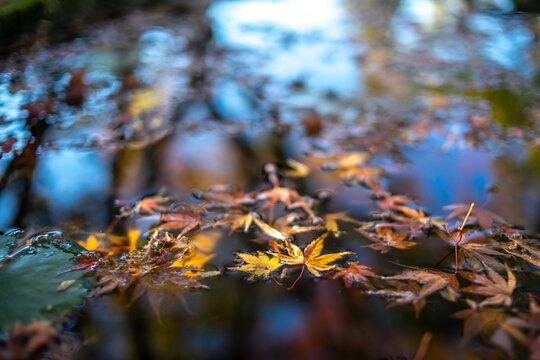 水面の落ち葉 秋のイメージ