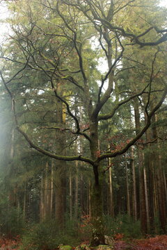 Une silhouette d'arbre dans la brume