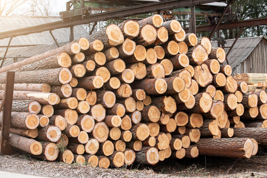 Factory and Industry. Log Stack. Timber Production, Transportation and Deliver