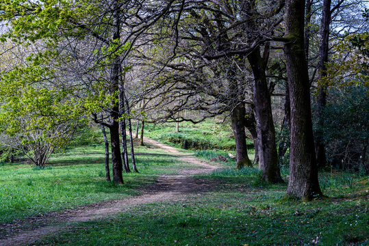 A path between trees and fields with grass, going forward turns left and disappears behind the trees. Bigger trees on the right and younger trees on the left of the road