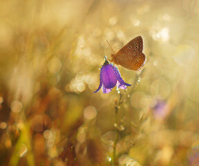 the butterfly on the flower