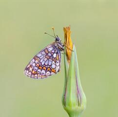 sliczny motyl