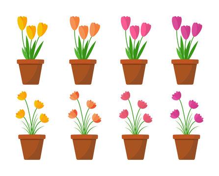 flat flower in pots vector illustration png