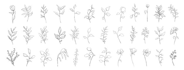 Fototapeta Set of botanical line art floral leaves, plants. Hand drawn sketch branches isolated on white background. Vector illustration