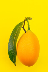 Fototapete - Yellow collection. Side view of ripe yellow fruit with leaf in summer season of Thailand on yellow background, marian plum, Bouea macrophylla, plum mango, gandaria.
