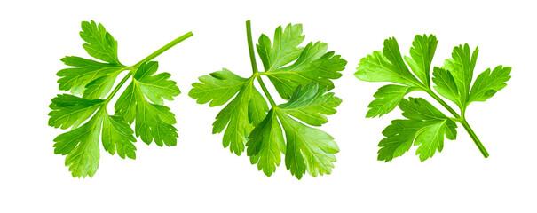 Fototapeta Parsley herb isolated on white background obraz