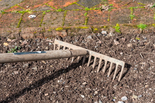 Garden rake being use to prepare the dirt soil of a garden flower bed before planting out, stock photo image