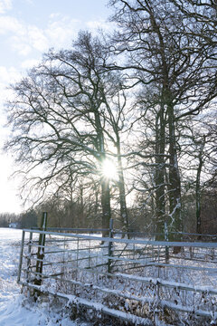 Sunbeams shining through trees in a snowy landscape with a fence and a meadow