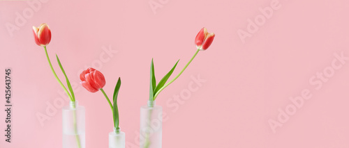 Red tulips in mate glass vases on pink background. Simple home decor idea with bud vases. On trend floral arrangements. Template for Easter, springtime, women's day, mother's day.