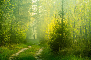 A beautiful scenery of an old road leading through the spingtime forest. Spring landscape of a forest road in woodlands in Northern Europe.