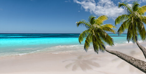 Idyllic tropical beach with palm trees.