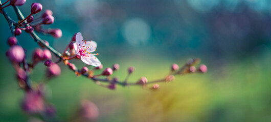 Spring border or background art template with spring pink blossom. Beautiful nature scene with blooming tree and sun flare. Idyllic springtime nature closeup, romantic flowers soft texture