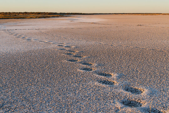 Huge elephant foot steps in dried out desert lake
