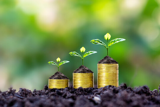 Plants are planted on coin stacks for finance and banking, ideas for saving money and investing in financial business.