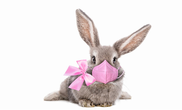 Cute baby bunny with beautiful eyelashes and pink bow around neck and pink colored respirator mask.