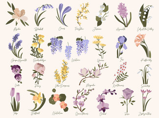 Fototapeta Set of spring modern flowers. Azalea,bluebell,crocus,daffodil,forsythia,grape hyacinth,iris,jasmine,kaffir lily,magnolia,nasturtium,orchid,quince,roze,snowdrop,tulip,ulex,wisteria in pastel colors obraz