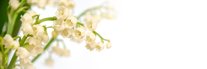 Lily of the valley flower blossom, white panoramic background. May 1st, May Day web banner