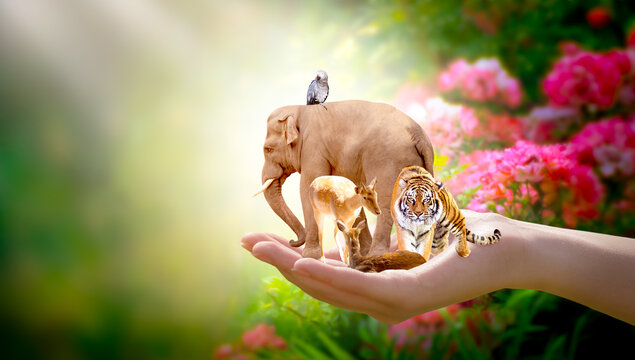 Earth Day, World Animal or Wildlife Day concept. Save our planet, protect nature reserve, protection of endangered species and biological diversity. Elephant, tiger, deer, parrot in human hand.