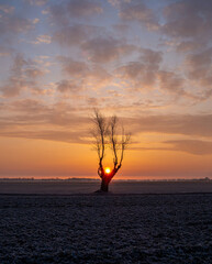 lonely tree and sunrise