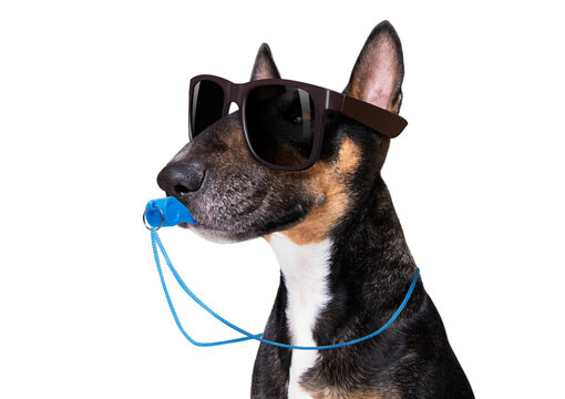 Referee arbitrator dog with whistle