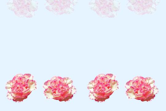 frame. colorful carnation flowers. Floral background.