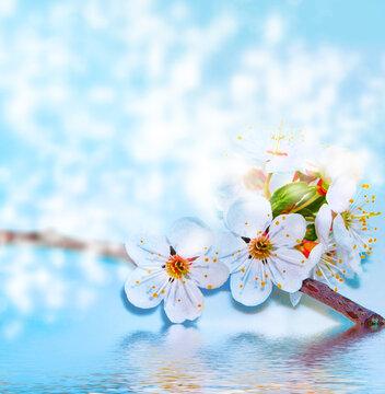 Bright colorful spring flowers. springtime