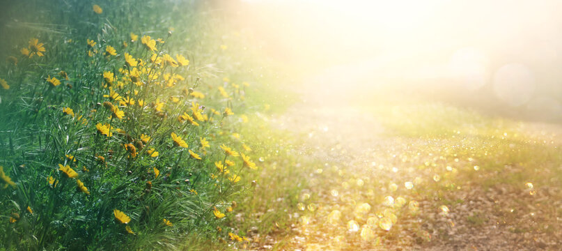 abstract dreamy photo of spring meadow with wildflowers