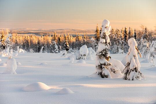 Snow covered winter landscape, Kuusamo, Finland