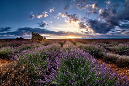 Ruins in a lavender field at sunrise in Provence, France