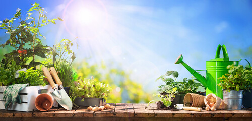 Gardening tools and seedlings on wooden table outdoors