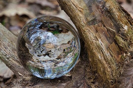 Glaskugel in einer Wurzel