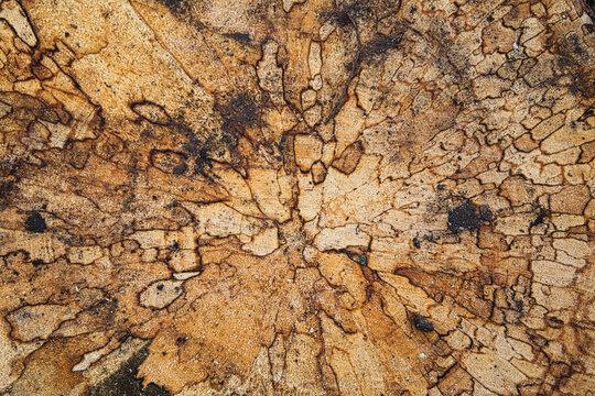 Textur eines Baumstamms