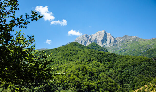 mountains covered with green trees