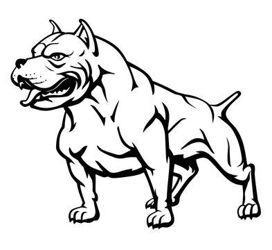 Tough Pitbull Pet Dog, Line Art Illustration
