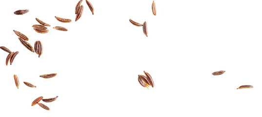Fototapeta Caraway seeds isolated on a white background.
