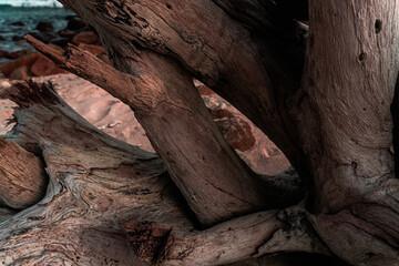 Piękne naturalne tło, drewniany konar pełen pęknięć, strukturalna tekstura.
