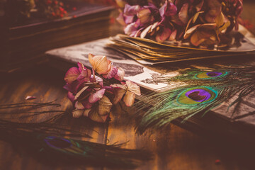 Old book and photo album, dried flowers and peacock feather eye in vintage style